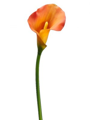 "21"" PVC Calla Lily Stem Two Tone Orange"