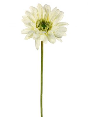 "21.5"" Medium Gerbera Daisy Spray Cream"