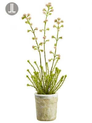 "19.5"" Horseweed Plant With Bloom in Clay Pot Pink"