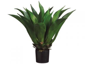 "33"" Giant Mexican Agave in Plastic Pot Green"