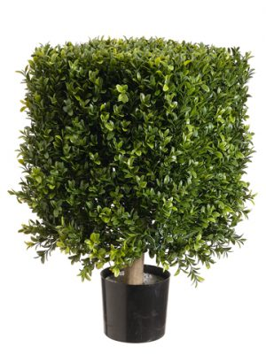"21"" Square Boxwood Topiary in Plastic Pot Two Tone Green"
