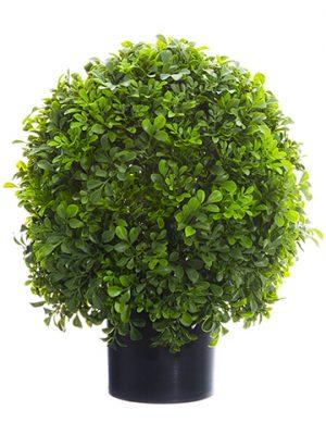 "16"" Boxwood Ball Topiary inNursery PotGreen"