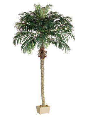 8' Phoenix Palm Tree inRectangular Plastic Pot