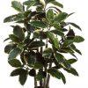 """39"""" Rubber Leaf Plant in Pot Variegated"""