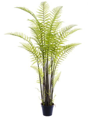 "71"" Forest Fern in Plastic Planter Green"