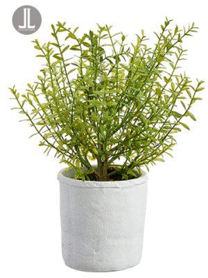 "15"" Myrtle in Cement Pot Green"
