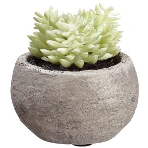 "3"" Succulent in Cement Pot Two Tone Green"