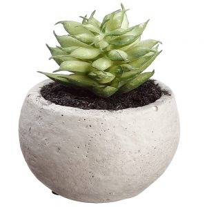 "2.5"" Succulent in Cement Pot Two Tone Green"
