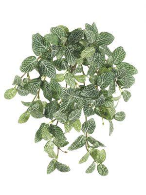 "13"" Mini Fittonia HangingBush x9 w/120 LeavesGreen White"
