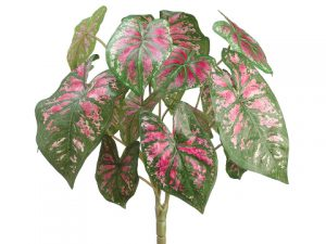 "18"" Caladium Plant x3 Green Red"