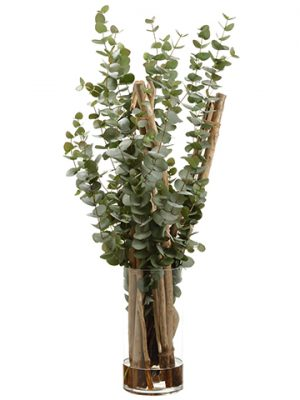 "47""H x 21""W x 13""L Eucalyptus inGlass VaseGreen"