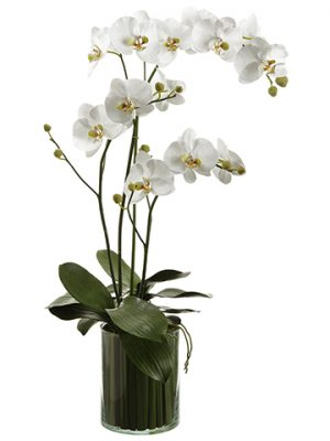 "36""H x 9""W x 22""L Orchids in Soil Glass Vase White"
