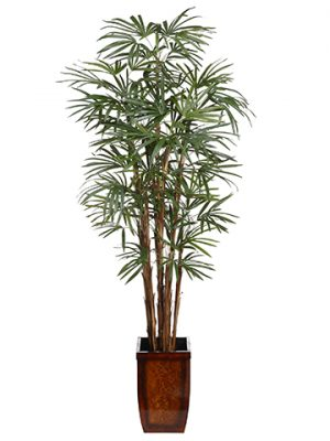 7'Honey Rhapis Palm in WoodContainerGreen