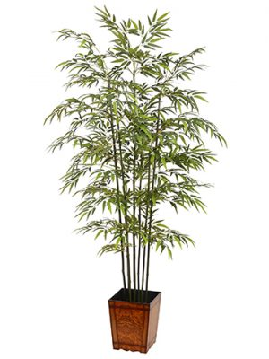 7.5' Bamboo Tree in WoodContainerGreen