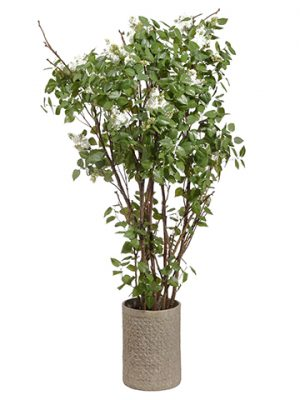 7.5'Lilac Tree in Stone Pot Green